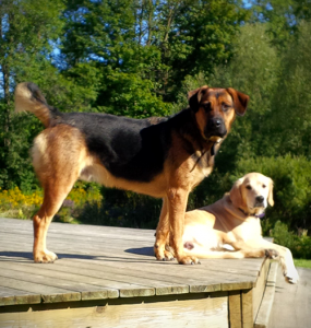 dogs-on-deck